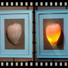 Handmade Real Seashell Frame Lamp with Free Delivery (Melo Aethiopica)
