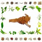Pure Akkalkadha Muli - Anacyclus pyrethrum root - Natural Health Care