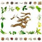 Raw Herbs - Harnvel - Paederia foetida – 100% Natural Ayurveda Health Care