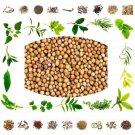Organic Pure And Natural Raw Herb Pili Rai - Mustard seed yellow