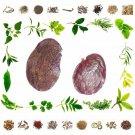 Raw Herb Palas Bee - Butea monosperma Seed-25 Gms
