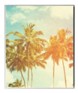 Ankit Palm Tree Canvas Wall Art Wall Decor For Living Room Wall Quote Dorm Room