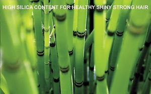 PURE BAMBOO EXTRACT condition repair skin hair scalp shine & luster 4 oz. MAKES2 80oz.
