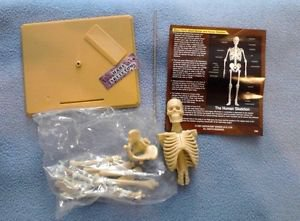 ScienceTime Human Skeleton Model Build Your Own Education Homeschool Realistic