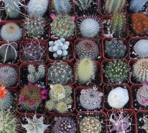 5 Gorgeous Cactus Collection unique from Jmbamboo