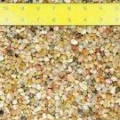 3 Lbs Salmon Bay Pebbles for Bonsai Tree Humidity Tray  & Bonzai (FREE SHIPPING)