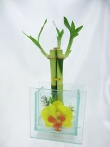 Live 3 Style Lucky Bamboo Plant Arrangement with 3D Beauty Glass Vase