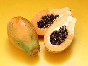 "hawaiian Papaya Live Plant Great Tropical Trees Large 6"" Pot"