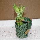 Live 10/4-6'' style Party Bamboo Plant Arrangement w/dolphin 4''Ceramic Vase