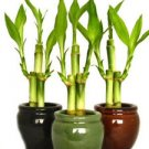 3 Colors Bamboo Style Mini Ceramic Vases and total 9 Stalks (FREE SHIPPING)