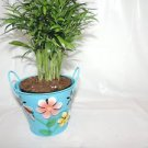 Victorian Parlor Palm Chamaedorea Indestructable (FREE SHIPPING)