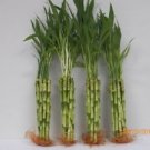 "40 Stalks of 10"" Straight Bamboo Wholesale Price"