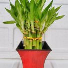 "2 Tier Lucky Bamboo - 6"" & 4"" - With 5'' Vase Fuchsia Color (FREE SHIPPING)"