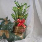 lucky bamboo16'' pulgadas de alto tanvien imcluye lavace de eletfante simbolisa
