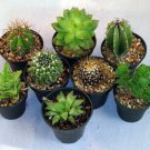 """Instant Cactus/Succulent Collection - 8 Plants 2"""" pots (FREE SHIPPING)"""