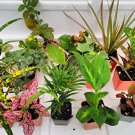 Terrarium/Fairy Garden Kit with 10 Plants - Create Your Own Living Terrarium (FREE SHIPPING)