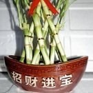 """3 Tier 6"""" 8"""" 10"""" Top Quality Lucky Bamboo for Feng Shui"""