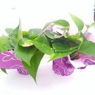 Two Golden Devil's Ivy Pothos 4'' Pot - Gift Wrapped Plant (FREE SHIPPING)