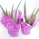 """Two Strong Aloe Vera - Medicine Plant Gift 4"""" Pot Wrapped"""