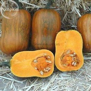 Honeynut Squash Butternut Vegetables, 10 seeds, heirloom sweet organic pumpkin