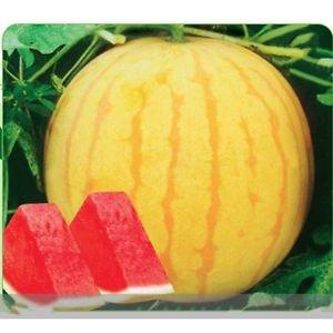 Heirloom 'Huang Pi Qiu' Yellow Skin Red Seedless Watermelon Seeds