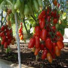 Heirloom Ukraine Kibits Tomato Seeds, professional pack, 100 Seeds