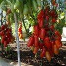 Heirloom Ukraine Kibits Tomato Seeds, professional pack, 100 Seeds