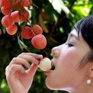 Succulent Plants Lychee Lychy Litchi Seeds, Leechee Fruit Tree Seeds