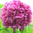 Heirloom Purple Chinese Peony Flower Seeds, 1 Professional Pack, 5 Seeds / Pack