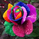 150 pcs Seeds Rare Holland Rainbow Rose Flower Home Garden Rare Flower Seeds