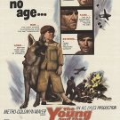 The Young And The Brave (1963) - Rory Calhoun  DVD