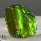 AMMOLITE Ammonite Rare Gem Stone from Canada  35 ct / 29.55 x 26.35 x 4.04 mm