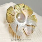 MABE Blister PEARL in SHELL Lustrous Rainbow Iridescent Carving Sumbawa 12.57 g