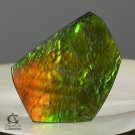 AMMOLITE Ammonite Rare Gem Stone from Canada  40.5 ct / 32.05 x 26.90 x 4.03 mm