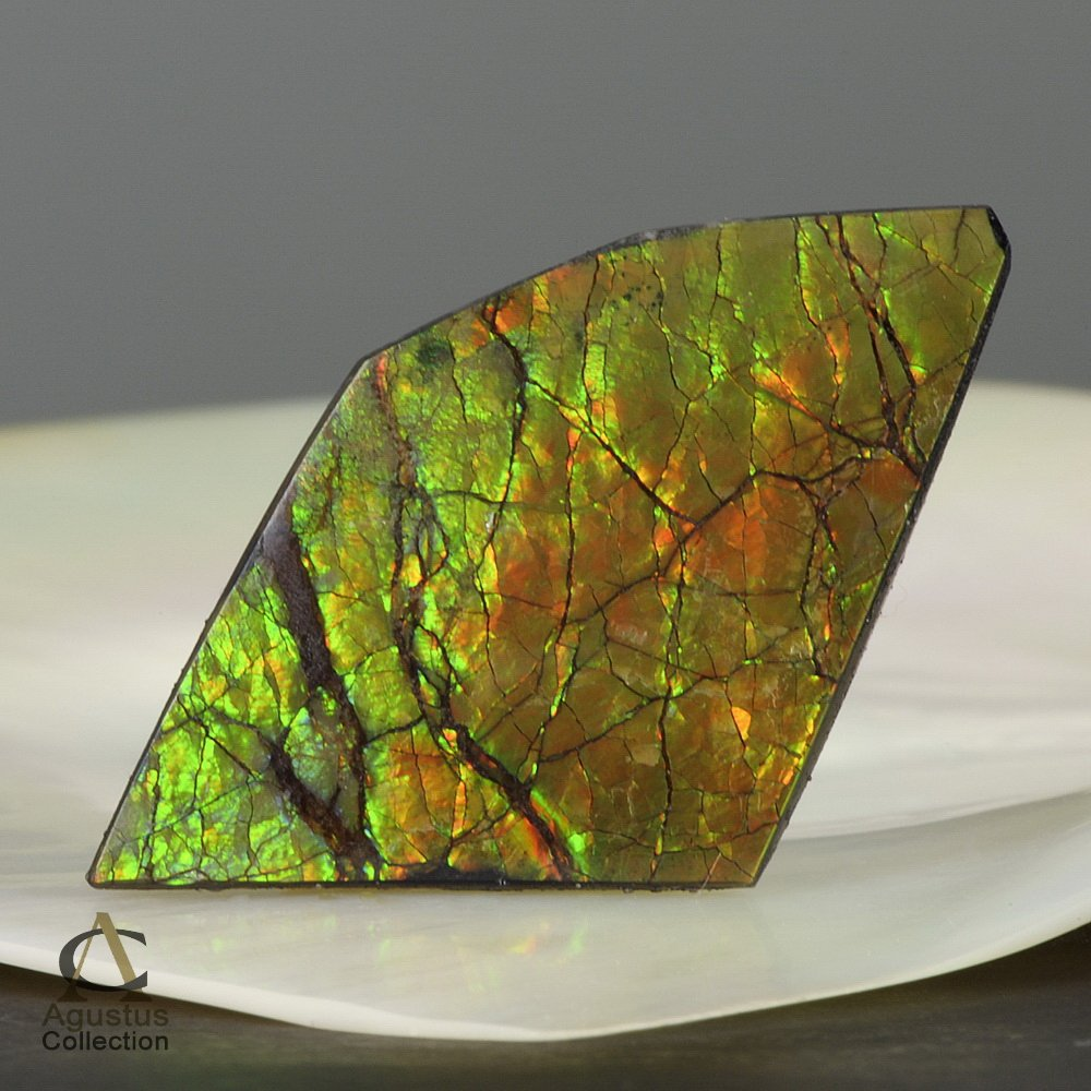 AMMOLITE Ammonite Rare Gem Stone from Canada  20.5 ct / 41.11 x 24.10 x 3.84 mm