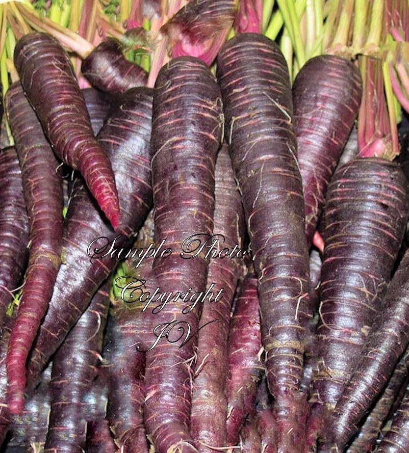 100 Seeds Purple Haze Carrot Seeds Extra Sweet Gourmet Great Market or Home Gardeners