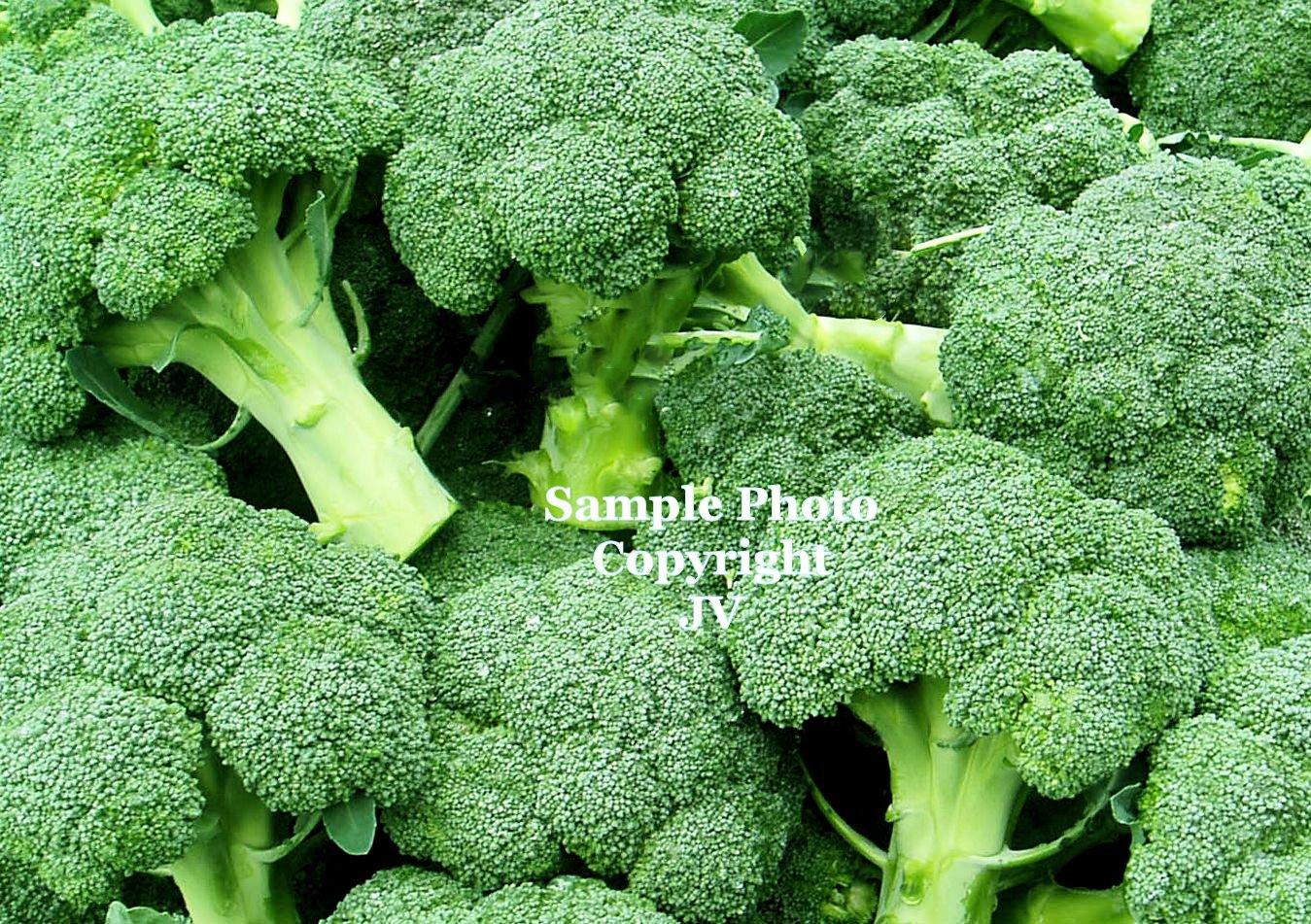 40 Seeds Broccoli DeCicco Long Season Producer old-Italian heirloom huge harvests Fresh Frozen