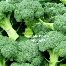 40 Seeds Broccoli DeCicco Long Season Producer old-Italian heirloom huge harvests Fresh Frozen