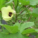 75 seeds Okra Clemson Spineless Heirloom colorful gorgeous flowers loves summer heat