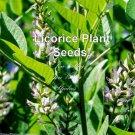 Liquorice 10 Seeds purple-blue Blossoms Perennial borders Herb Gardening Glycyrrhiza glabra