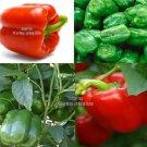 15 Seeds  Yolo Wonder Sweet Pepper Seeds Heirloom Non GMO Productive Tasty Beautiful