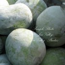 10 seeds Benincasa hispida Winter Melon Seeds Wax Non GMO Long Shelf Life Good producer
