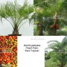 5 Tropical seeds! Bactris gasipaes Peach Palm rare seeds Perfect Houseplant Container Gardening