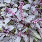 150 Basil Seeds Dark Purple Opal Non GMO Aromatic Herb Market or Home Gardening