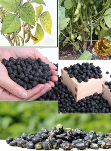 roasted black soybean 500g antiaging food estrogen