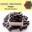 2 Lb/908g PRONOJIWO Sterculia Javanica Organic Dried Herbs Wild Crafted Aphrodisiac