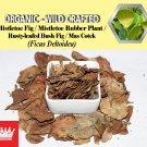 3 Oz / 84g Mistletoe Fig Leaves Mistletoe Rubber Plant Rusty-leafed BushFig Ficus Deltoidea