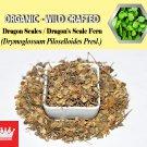 2 Lb / 908g Dragon Scales Dragon's Scale Fern Drymoglossum Piloselloides Organic Wild FRESH