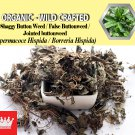 8 Oz / 227g Shaggy Button Weed False Buttonweed Jointed buttonweed Spermacoce Hispida FRESH