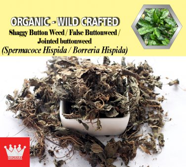 2 Lb / 908g Shaggy Button Weed False Buttonweed Jointed buttonweed Spermacoce Hispida FRESH